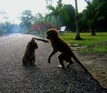 1185211632-cat-and-monkey-on-a-road[1].jpg